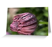 Drops of Dew Greeting Card