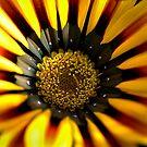 Black & Yellow by Joy Watson
