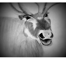 Reindeer Is Happy To See You Photographic Print