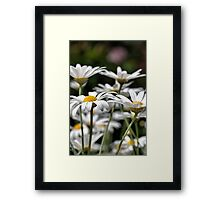 Heights of daisies Framed Print