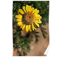 Daisies Pattern Poster