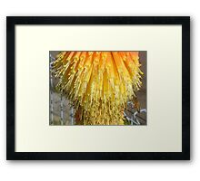 Bee at the Bottom Framed Print