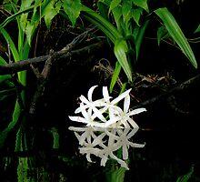 Swamp Lily by Rebecca Cruz
