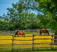Horses in the spring by Laura Buchanan