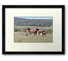 Wild Brumbies with Foals Framed Print