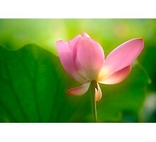 Lotus #79 Photographic Print