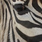 Eye Of The Zebra by DJMarchese