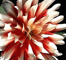 Bright is Dahlia  by Joy Watson