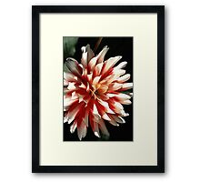 Bright is Dahlia  Framed Print