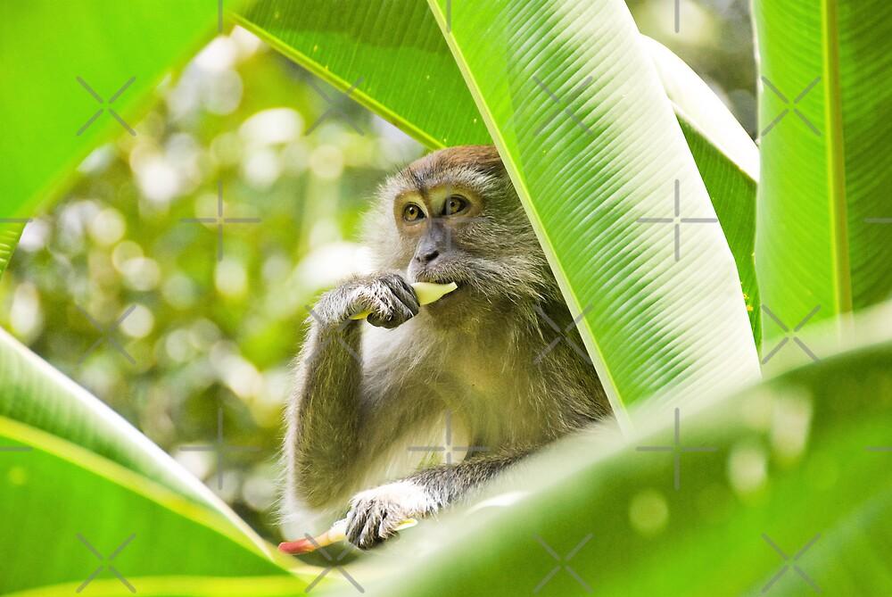 Monkey business by Juha Sompinmäki