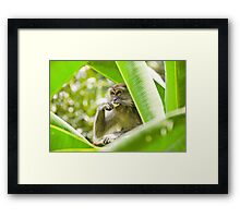 Monkey business Framed Print