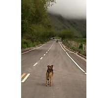 littlest hobo Photographic Print