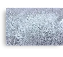 Winter's Spell II Canvas Print