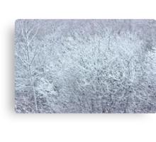 Winter's Spell II Canvas Print