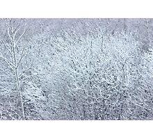 Winter's Spell II Photographic Print
