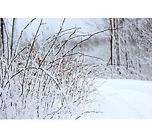 Winter's Spell III Photographic Print