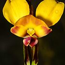 Donkey Orchid. by James Peake Nature Photography.