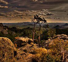 Two Trees by Robert Serpan