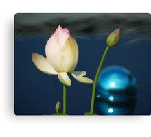 tulip & blue ball Canvas Print