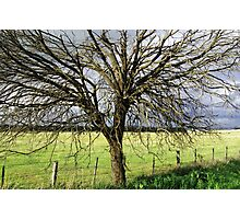 Greenvale,Victoria,Australia Photographic Print