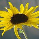 Healing Women Sunshine by tkrosevear