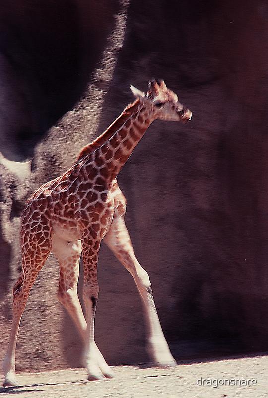 New baby Giraffe by dragonsnare