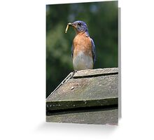 Blue Plate Special Greeting Card