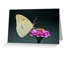 Pink Passion Drink Greeting Card