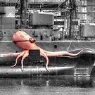 Unexpected retrieval in Sydney Harbour by Chris Allen