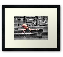 Unexpected retrieval in Sydney Harbour Framed Print