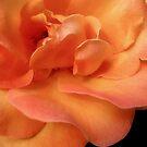 Orange Rose by Nancy Polanski