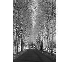 Corridor of Trees Photographic Print