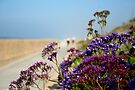 Beachwalk Wildflowers by Donell Trostrud
