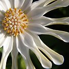 White sister by oiseau