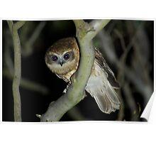 Boo-Book Owl Poster