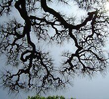 SoraMatsu (sky pine) by yvesrossetti