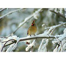 A Beautiful Winter Morning Photographic Print
