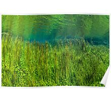 Reeds and Ripples. Poster
