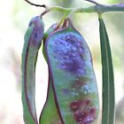 Seed Pods by Marilyn Harris
