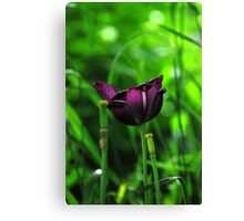 Ive been purple Canvas Print