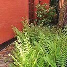 Ferns by Heather Thorsen