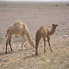Camel Babies by Marmadas