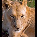 African Lioness by SandraPerdigao
