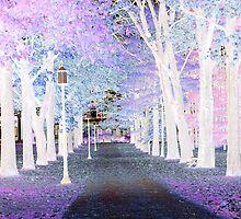 City Sidewalkss by dmosher