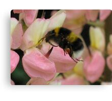 Pink Lupin With Guest Canvas Print