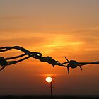 Sun through the wire by Anita Schuler