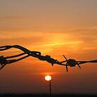 Sun through the wire by Anita Schuler