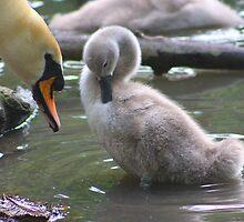 Motherly Bonding......... by jdmphotography