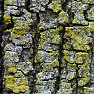 Liken the Lichen by Kate Hibbert