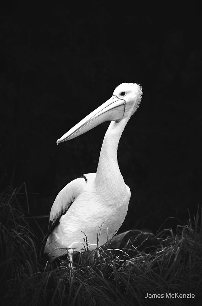 Animals VII by James McKenzie